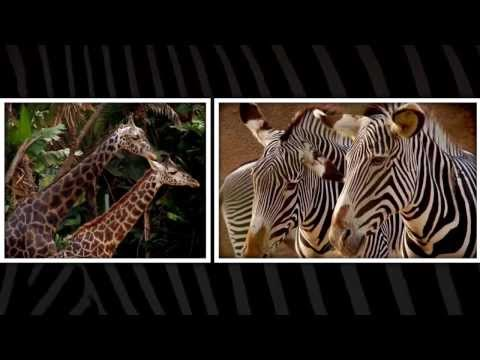Visit the Los Angeles Zoo (in HD)