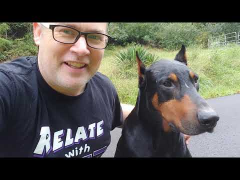 Dobermann Pinscher - DEVIL DOGS - The Stigma and Struggle