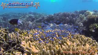 Ocean Safari promo clip Thumbnail