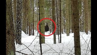 Охота на волка. Поехали за волком, но встретились только лоси.