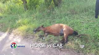 horse-vs-car-ch3thailand