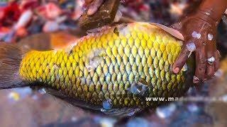 Amazing Fish Cutting Style | my3Streetfood