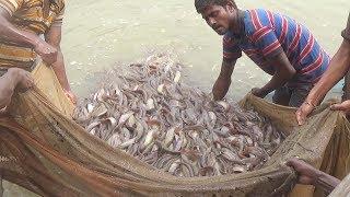 পুকুরে শিং মাছ চাষ করে বাবু হোসেনের সফলতা, Babu Hossain's success in cultivating Cat Fish