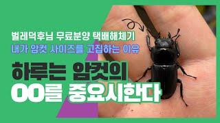 [하루] 내가 암컷 사이즈를 고집하는 이유 (ft.벌레…