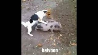 Animal matings video hd 2015 Animal sex video 2015 Funny animals 2014 Part 19