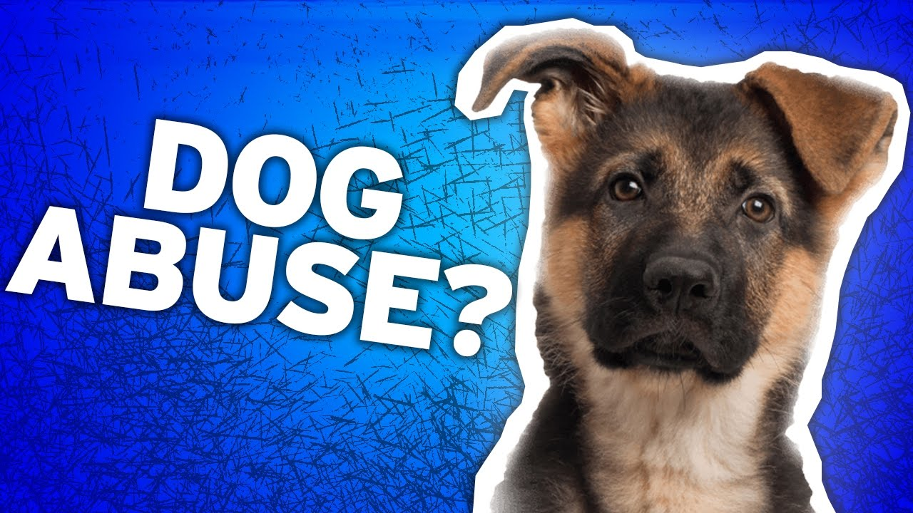 A Dog S Purpose Animal Abuse Behind The Scences