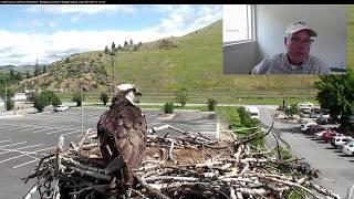 Live Q&A #2 With Dr. Erick Greene on Hellgate Osprey Cam – June 14, 2017 thumbnail