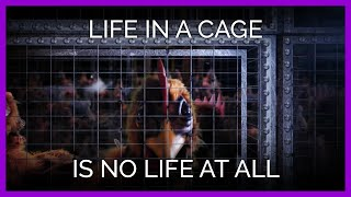 Life In A Cage Is No Life At All