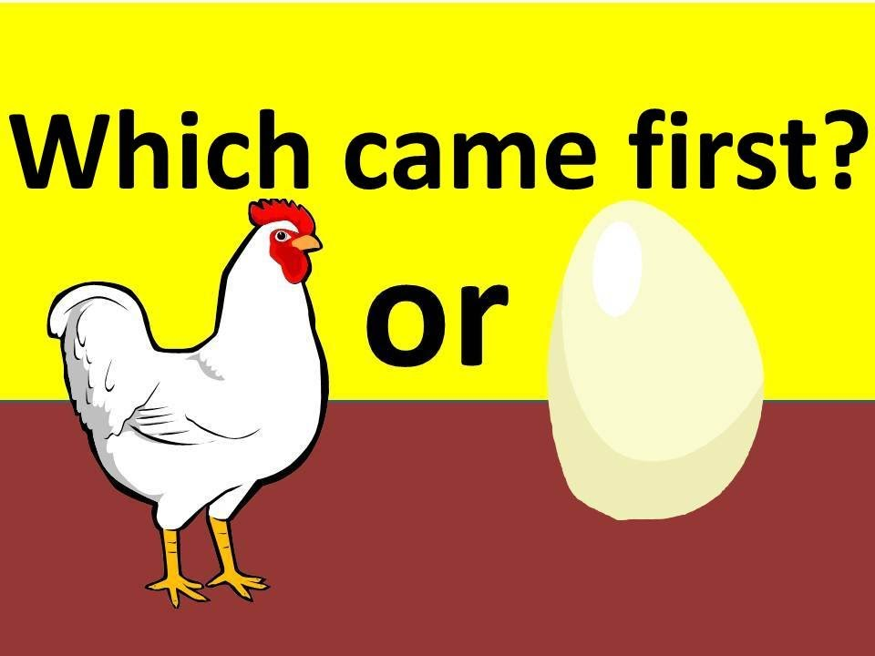 Chicken Egg What Funny Or Comes First