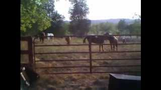 Nancey Groves - Horses