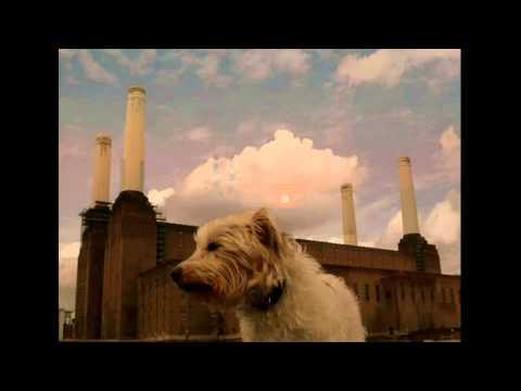 Pink Floyd - You've Got to Be Crazy (lyric video)