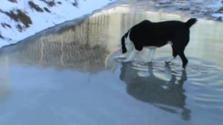 Наши собаки. п-к из Шатаграда.