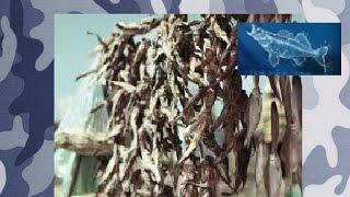 Как солить рыбу ( Бычок )