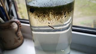 The Pond On My Window Sill - Ecosphere Week 1