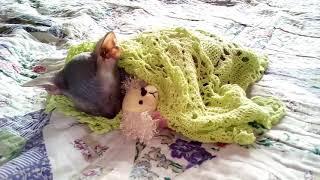 Милашка😍 Ричи сфинкс мой котик