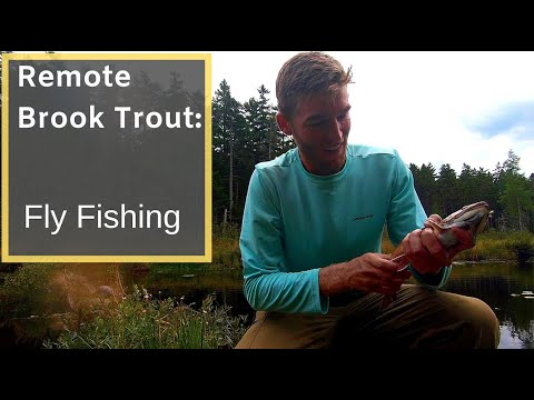 Maine Native Brook Trout - Fly Fishing