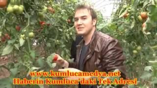 Mustafa Ceceli Kumluca'da Domates Serasını Gezdi Video