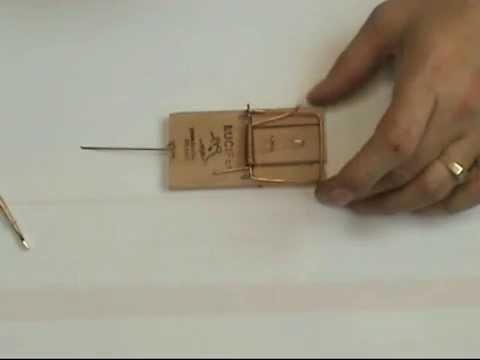een houten muizenval klaarzetten - youtube