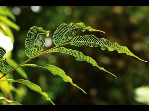 Plants of the UK Overseas Territories