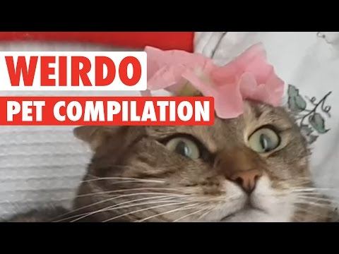 Animals Being Weirdos || Biggest Weirdo Pets
