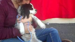 Tina A4228578  Adopted!!!