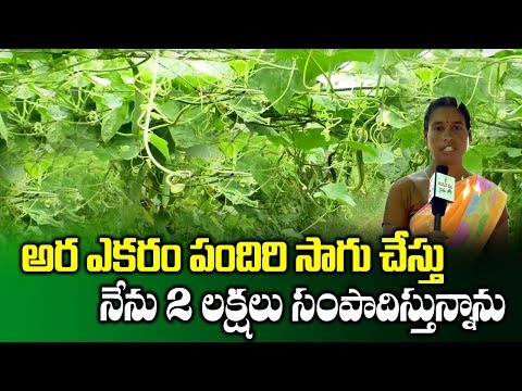 Farmer Earns High Profits In Vegetable Farming With Pendal System | Profitable Crops |SumanTV Rythu