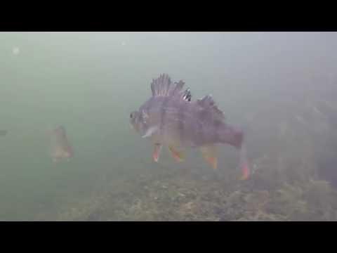 Dartford Brooklands lake