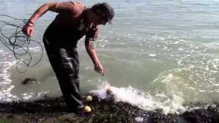 How to catch Herring with cast net at China Basin San Francisco - Jan 2013