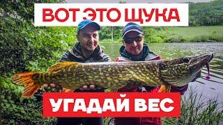 Ловля Щуки летом на ДИКАРЕ Конкурс Щука на спиннинг