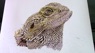 How To Draw Realistic Scales of Bearded Dragon