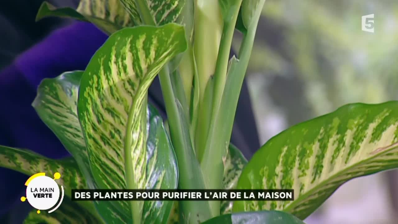 des plantes pour purifier l air de la maison youtube. Black Bedroom Furniture Sets. Home Design Ideas