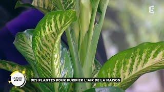 Des plantes pour purifier l'air de la maison