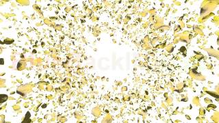 Stock Footage : Rose petals yellow front BCw