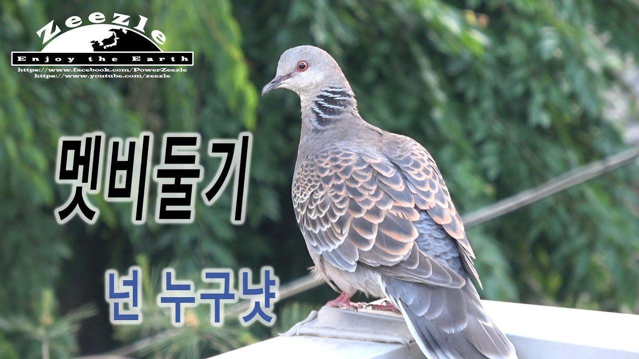[Man VS Wild] 멧비둘기? 멧토끼 멧돼지 멧이 뭐야?
