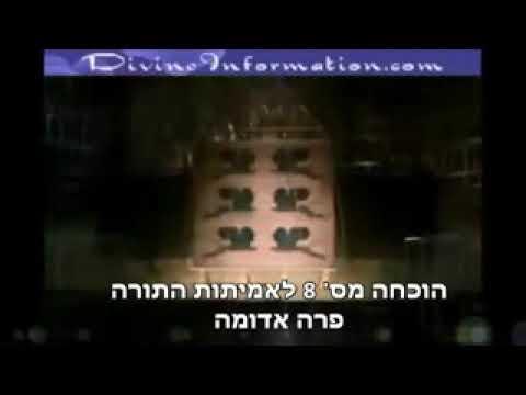 פרה אדומה, הוכחה מוצקה לאמיתות התורה🐂⚜ הרב יוסף מזרחי⚜
