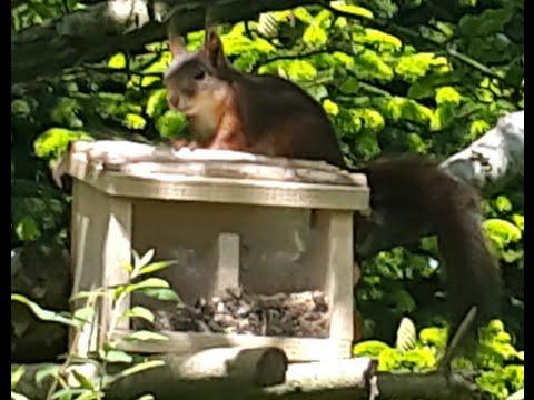Egern i haven foderhus - YouTube