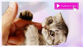Котёнок так кусается и царапается, Акопян милена