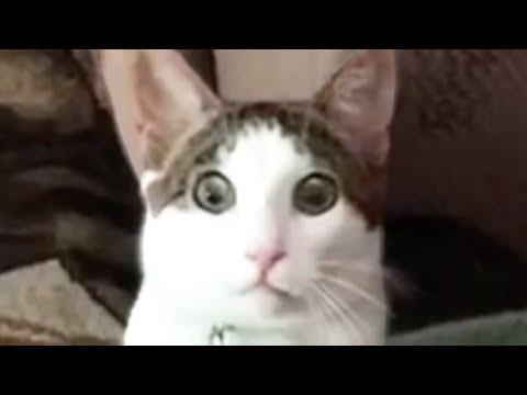 MUST WATCH CAT VIDEOS!
