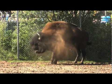 Tourism Moncton Promotional Video