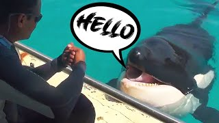 Meet Wikie - The World's First Talking Killer Whale