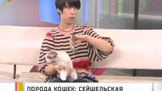 Порода кошек: сейшельская