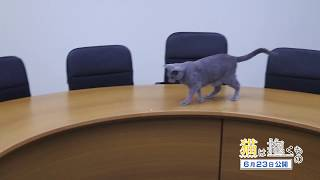 取材日の空き時間にレーザーポインターと格闘する猫・良男の動画です! ...