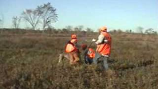 Upland Pheasant Hunting With A Weimaraner