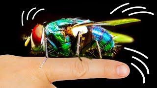 Perché le mosche sono attratte dal tuo viso
