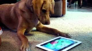 My dog loves om nom from cut the rope