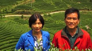 Mountain Tea, Fujian China