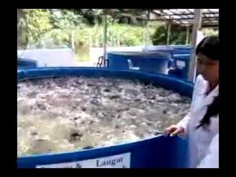 Mô hình nuôi cá biển mọi nơi