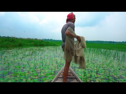 Net Fishing | Catching Fish By Cast Net | Fishing With Beautiful Nature (Part-14)