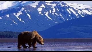 Harika Bir Belgesel Alaska  watch documentary  documentary पशु वृत्तचित्र документальный 动物纪录片