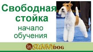Как поставить собаку в стойку? свободная стойка -  Как начинать обучение - уроки хендлинга
